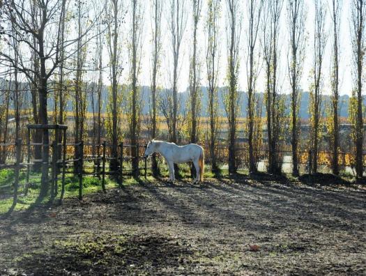 Parc à chevaux